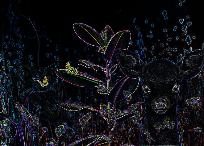 hypercolordeer.jpg