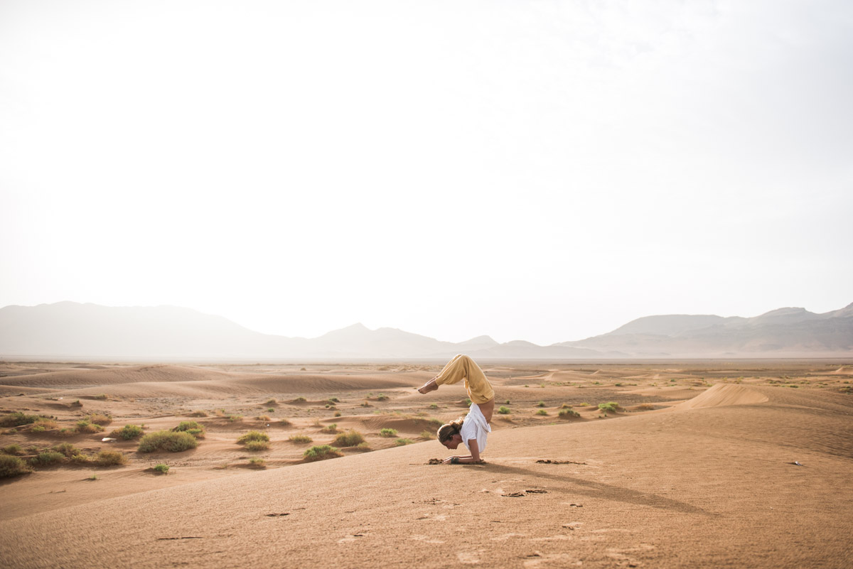 scorpion in zagora desert, morocco