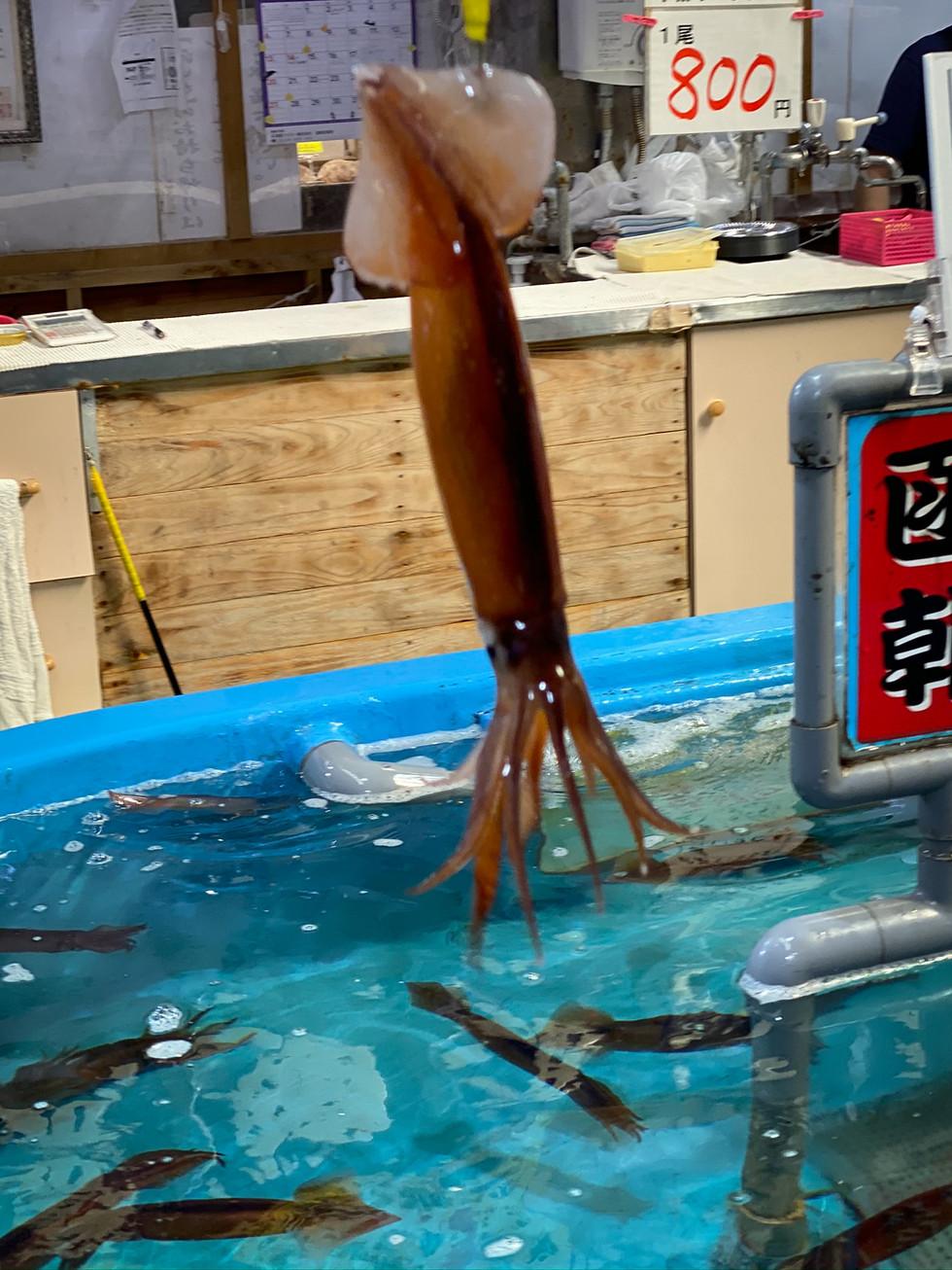 Squid Fishing - Japan Market