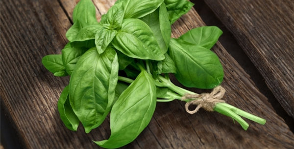 Large Sweet Basil