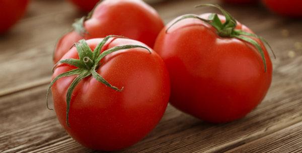 Champion II Hybrid Tomato