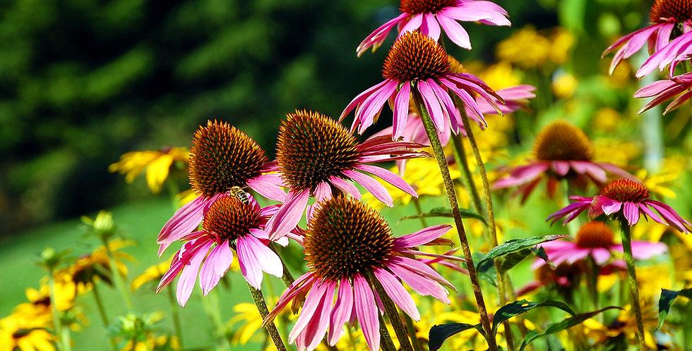 Perennial Wildflower Mix