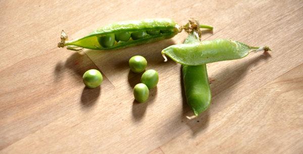 Extra Early Alaska Pea