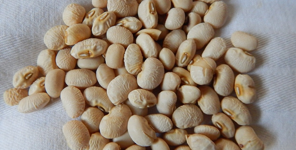 Texas Cream 40 Cowpea