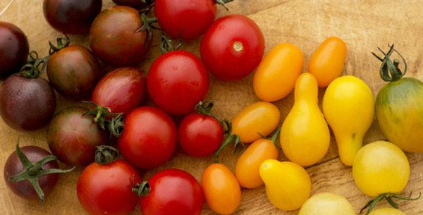 Rainbow Cherry Tomato Mix