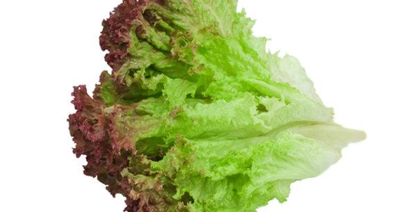 Prizehead Leaf Lettuce