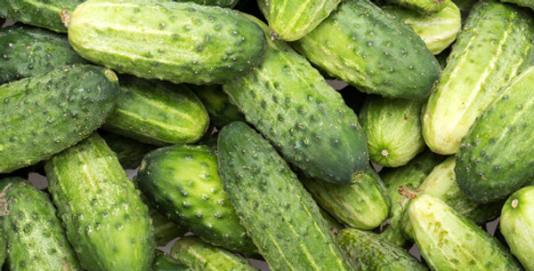 SMR 58 Pickling Cucumber