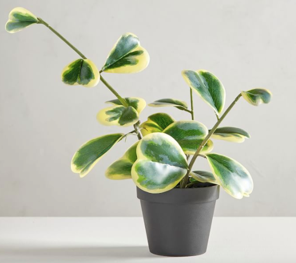 Faux Potted Trailing Heart Houseplant
