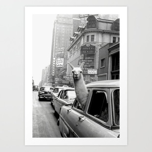 Llama Taxi Print