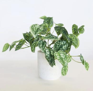 Artificial Satin Pothos - Scindapsus pictus House Plant