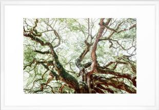 Angel Oak Tree Framed Art Print