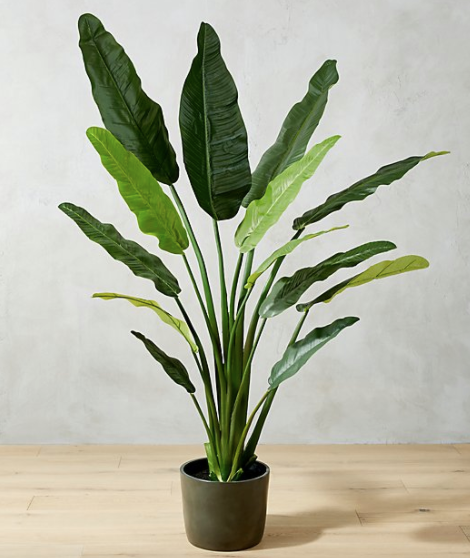 Potted Faux Birds of Paradise 6'
