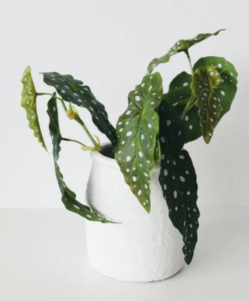 "Artificial Angel Wing Begonia Leaf Plant - 12"""