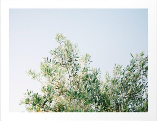 The Olive Tree Art Print