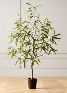 Faux Potted Eucalyptus Tree 5'
