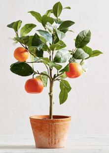 Faux Potted Citrus Trees