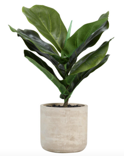 Faux Fiddle Leaf Fig Plant In Cement Pot