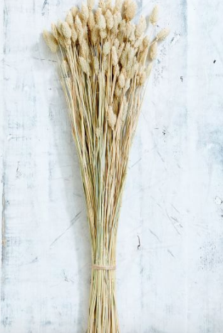 Dried Phalaris Bundle