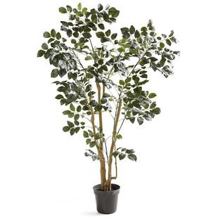 Faux Coffee Panax Tree