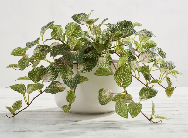 Faux Potted Fittonia Houseplant