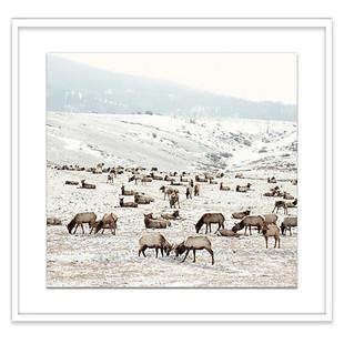 Elk Battle Print