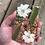 Thumbnail: White Flower & Fern Light Switch Cover🌿🤍