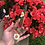 Thumbnail: Daisy Dagger Decor🤍🌼