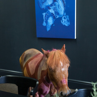 A Painted Horse by Joe Sola (with Matthew Chambers, Sayre Gomez, Rudy K. Slobeck, and others)