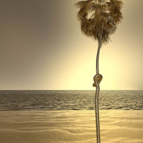 knotted palm, 2020