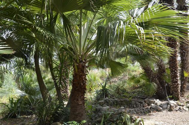 Palmengarten Villa Arte