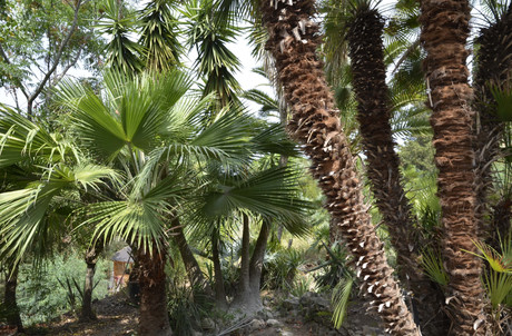 Palmen ausblick von Schlafzimmer 3