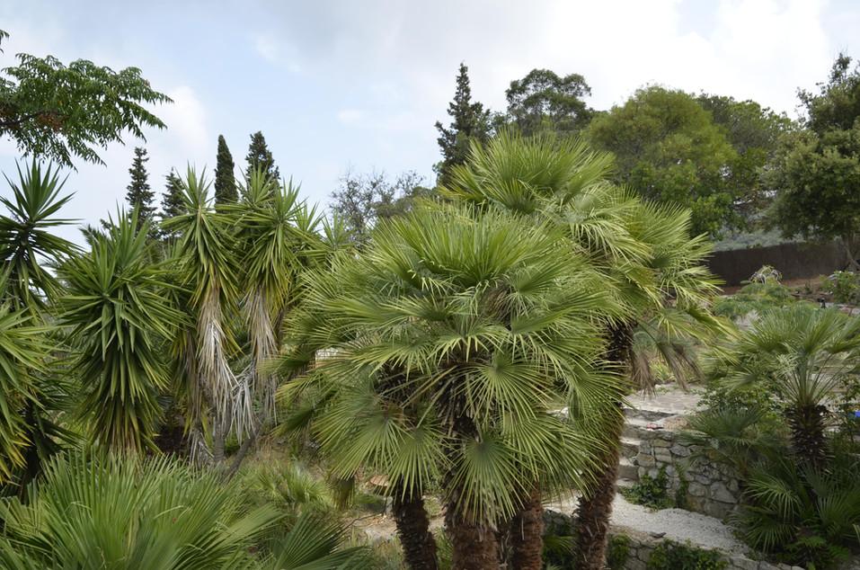 Blick über Palmendach