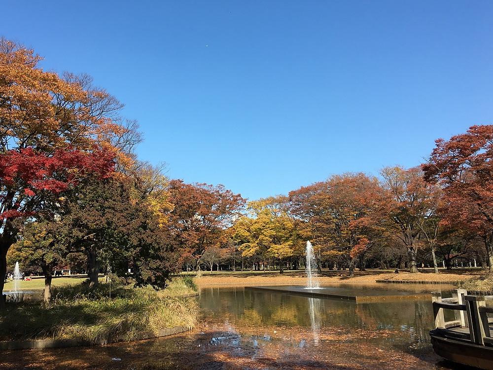 オプティシァンロイド 原宿 代々木公園 もみじ狩り 紅葉