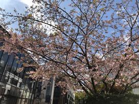 春の陽気のはらじゅく