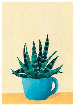 Crasa en taza azul
