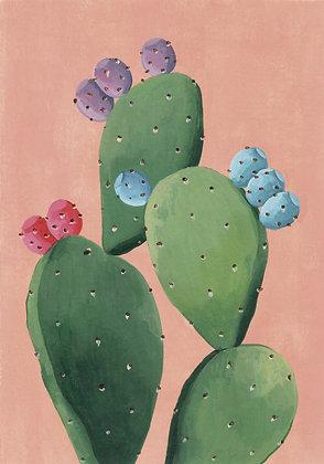 Cactus fondo coral