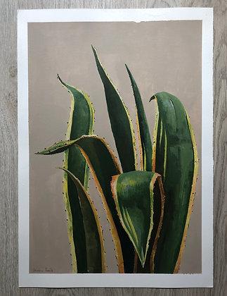 Cactus aloe