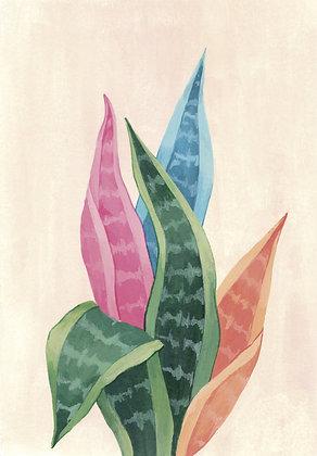 Aloe de colores
