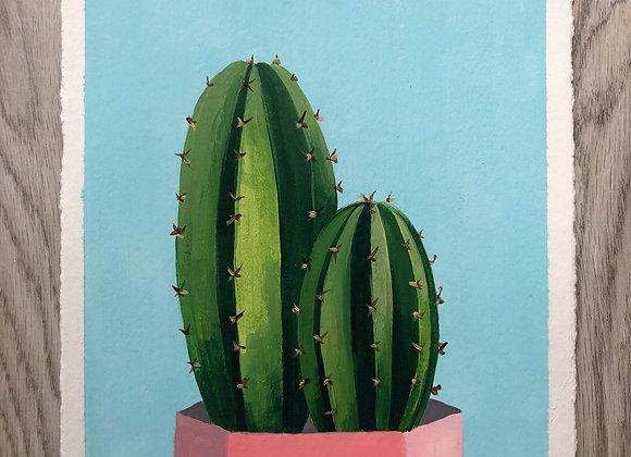 Cactus maceta rosa