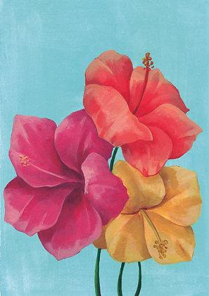 Rosa de China