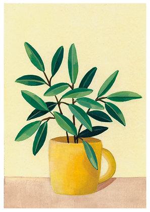 Olivo en taza amarilla