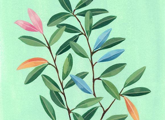 Olivo de colores