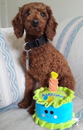 Happy 1st Birthday Scout!