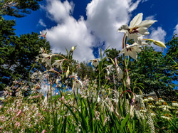 Photo de nature