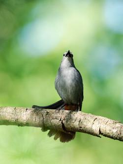 Balade photo d'oiseaux