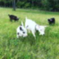Girls are enjoying new pasture and lovin