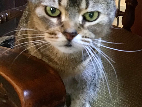 猫と私  ポチその14