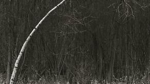 FOCUS ON PHOTOGRAPHY - ROBERT GRESHOFF