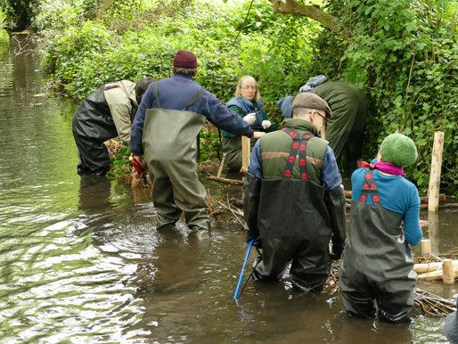 Reviving the Westbrook: a local initiative to restore a historic chalk stream in Faversham