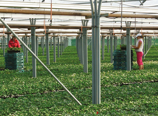 FAVERSHAM FARMS APPEAL FOR LOCAL WORKERS